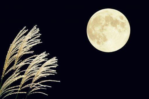 昔話の読解教材⑥ 『どうして月に兎がいるのでしょうか』