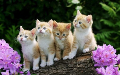 中国語と日本語の語彙の違い② 猫にまつわる諺