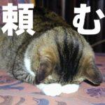 中国在住日本語教師への2つのお願い